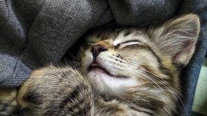 Preview wallpaper cat, cute, pet, funny