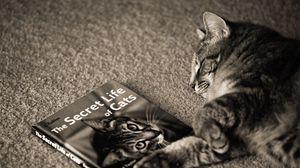 Preview wallpaper cat, dream, magazine, dreams