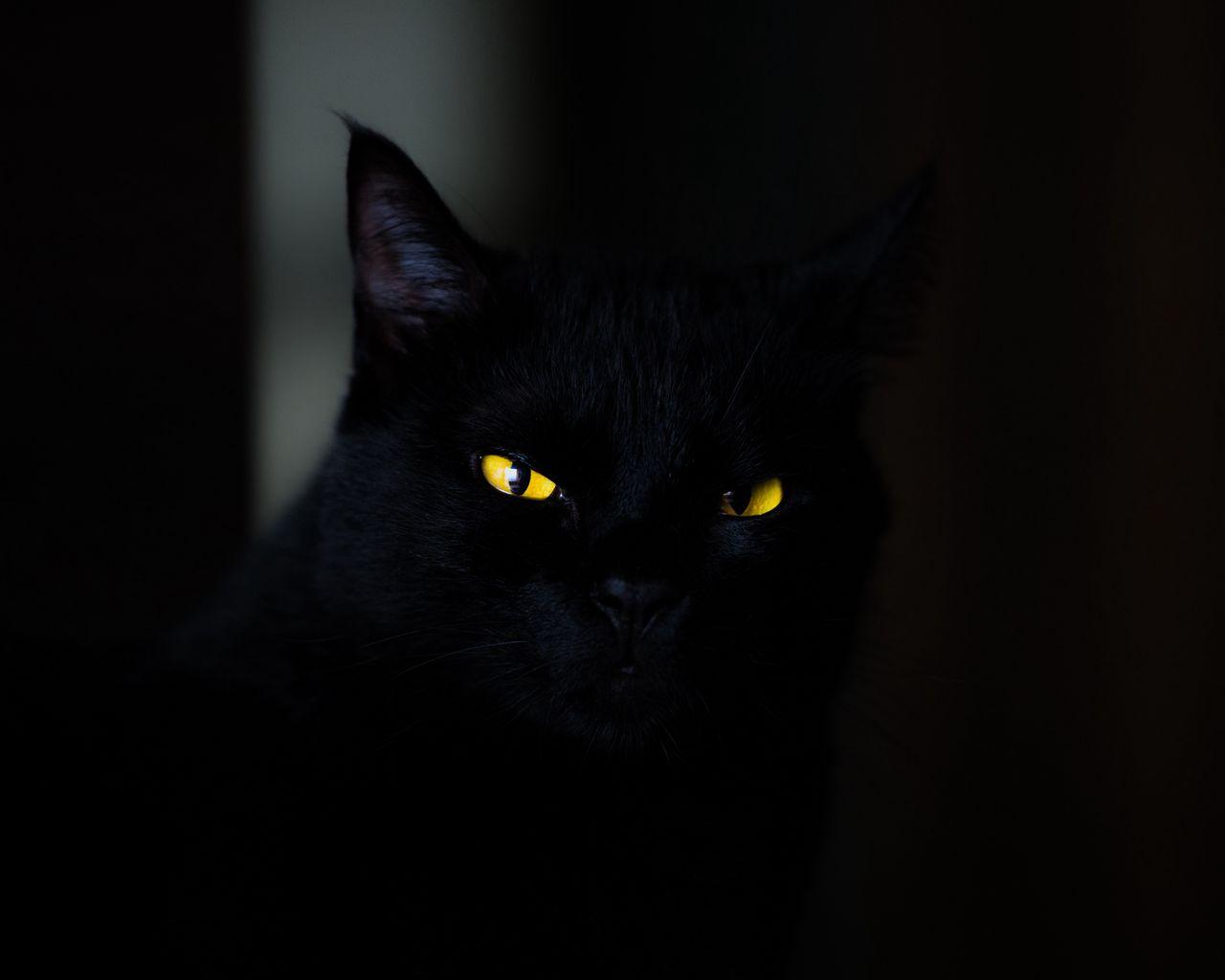 1280x1024 Wallpaper cat, eyes, black