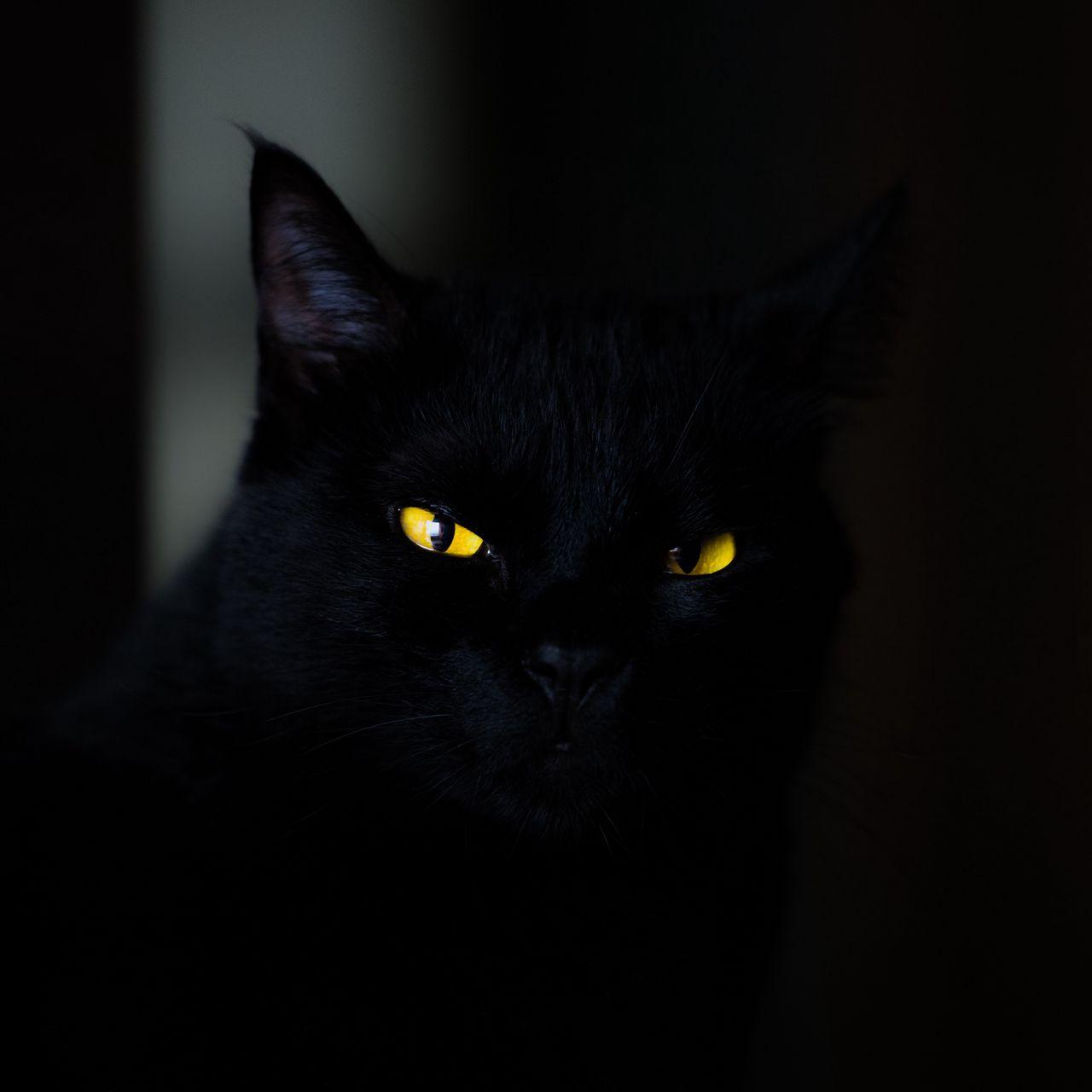 1280x1280 Wallpaper cat, eyes, black