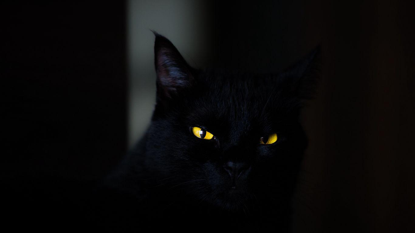 1366x768 Wallpaper cat, eyes, black