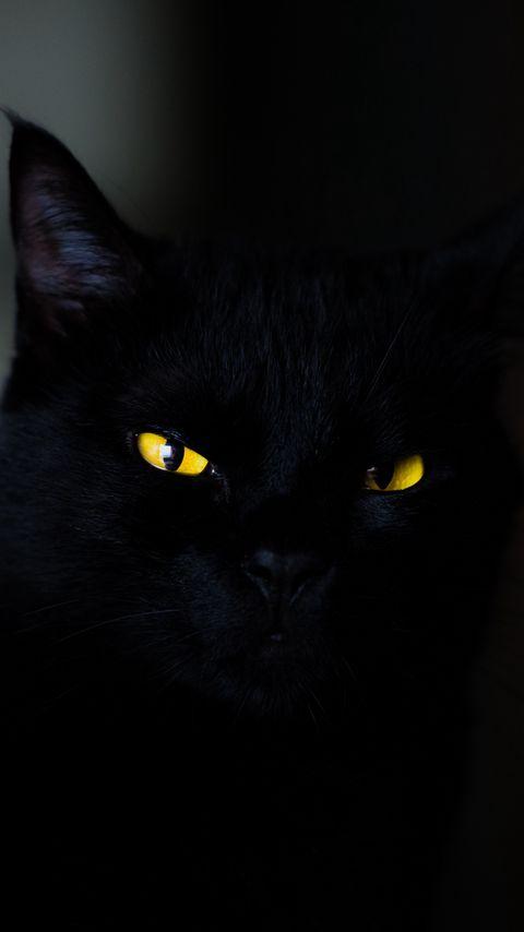 480x854 Wallpaper cat, eyes, black