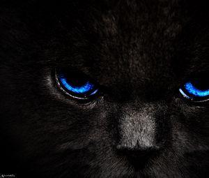 Preview wallpaper cat, eyes, blue, glance, dark