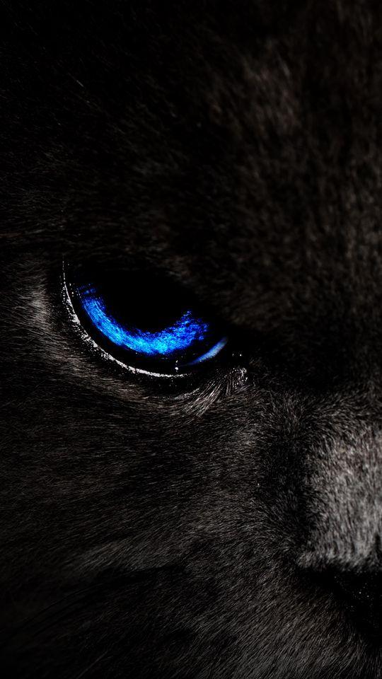 540x960 Wallpaper cat, eyes, blue, glance, dark