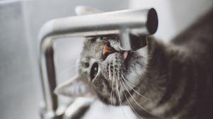 Preview wallpaper cat, tongue, water