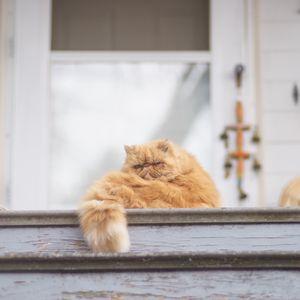 Preview wallpaper cat, fluffy, ladder