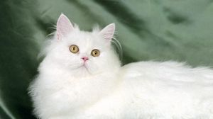 Preview wallpaper cat, fluffy, silk, lie