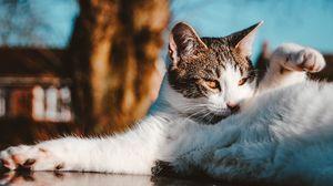 Preview wallpaper cat, funny, pet, lies