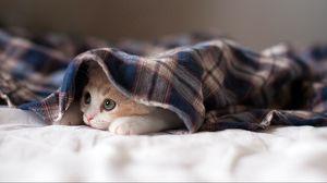 Preview wallpaper cat, lying, kitten, playful