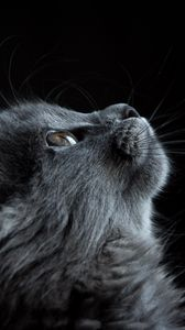 Preview wallpaper cat, muzzle, profile, black background