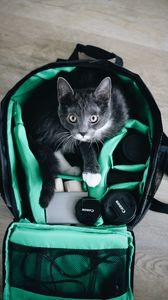 Preview wallpaper cat, pet, glance, bag, equipment