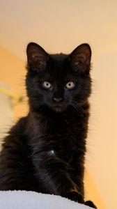 Preview wallpaper cat, pet, glance, fluffy, cute