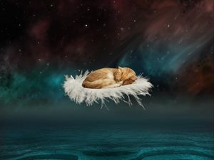 Preview wallpaper cat, photoshop, feather, flight, fantasy