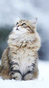 Preview wallpaper cat, snow, eyes, fluffy