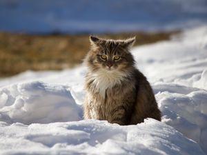 Preview wallpaper cat, winter, fluffy, snow