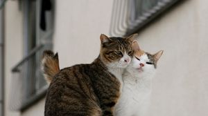 Preview wallpaper cats, couple, tenderness, love