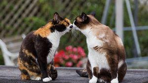 Preview wallpaper cats, kiss, tenderness