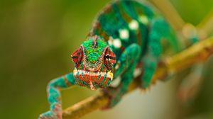 Preview wallpaper chameleon, color, climb, branch