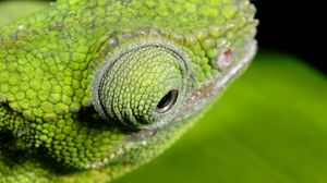 Preview wallpaper chameleon, color, eyes