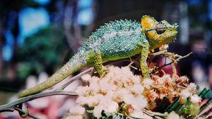 Preview wallpaper chameleon, colorful, reptile