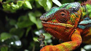 Preview wallpaper chameleon, eyes, grass, color