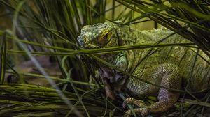 Preview wallpaper chameleon, grass, animal