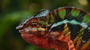 Preview wallpaper chameleon, lizard, glance