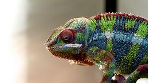 Preview wallpaper chameleon, lizard, reptile, colorful