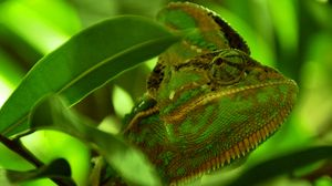 Preview wallpaper chameleon, reptile, color, leaves