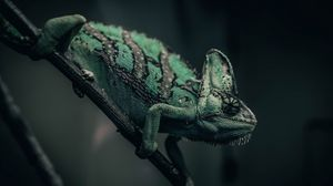 Preview wallpaper chameleon, reptile, green, mimicry, branch
