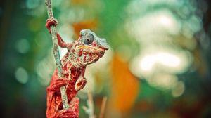 Preview wallpaper chameleon, reptile, lizard, color