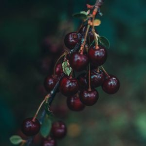 Preview wallpaper cherry, berries, branch, blur, ripe