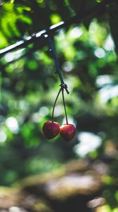 Preview wallpaper cherry, berries, red, ripe, branch