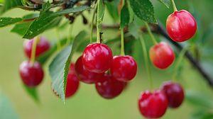 Preview wallpaper cherry, berry, branch, ripe