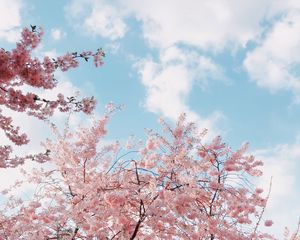 Preview wallpaper cherry, bloom, spring, flowers, branches, sky