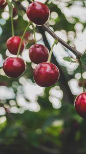 Preview wallpaper cherry, branch, berries, ripe