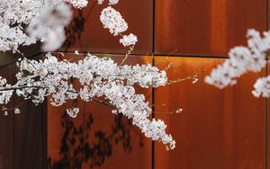 Preview wallpaper cherry, flowers, branches, tree, spring