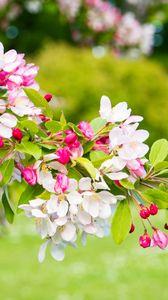 Preview wallpaper cherry, flowers, petals, branch, pink, macro