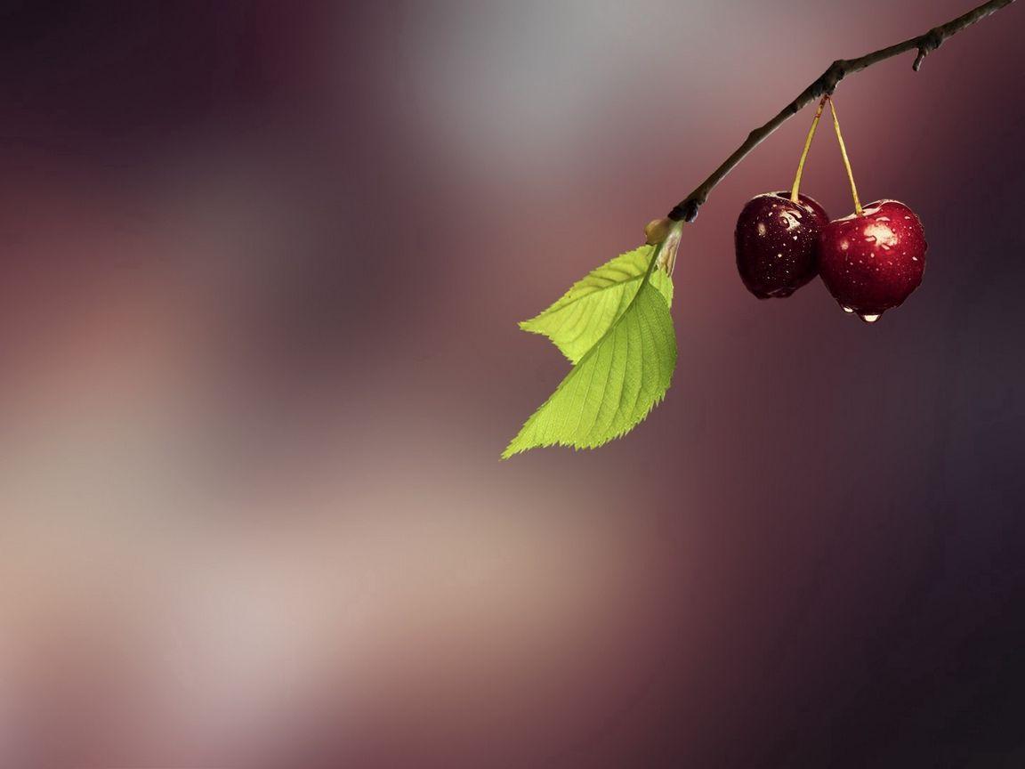 1152x864 Wallpaper cherry, grass, drops