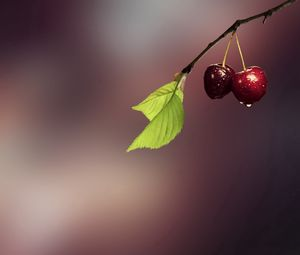Preview wallpaper cherry, grass, drops