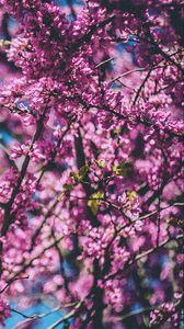 Preview wallpaper cherry, tree, flowers, flowering, spring