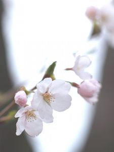 Preview wallpaper cherry, white, twig, sky, spring, motion blur, light