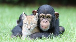 Preview wallpaper chimps, lynx, kids, grass