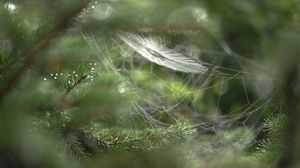 Preview wallpaper close-up, blur, web, branch, drops