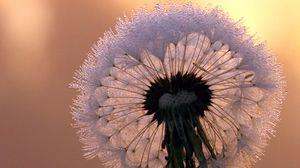 Preview wallpaper close-up, dandelion, stem, flower