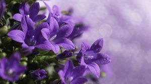 Preview wallpaper close-up, purple, flower, green