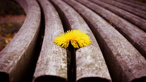 Preview wallpaper close-up, timber, dandelion, yellow, flower
