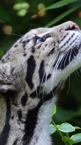 Preview wallpaper clouded leopard, wild cat, snout, spotted