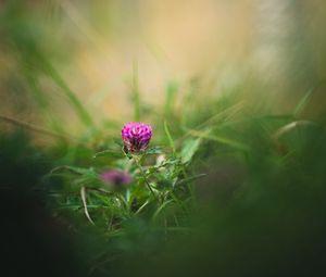 Preview wallpaper clover, flower, grass, macro