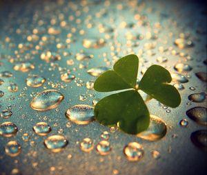 Preview wallpaper clover, grass, surface, drops, dew